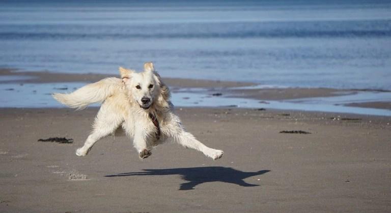 Urlaub mit Hund in Dänemark? Na klar!