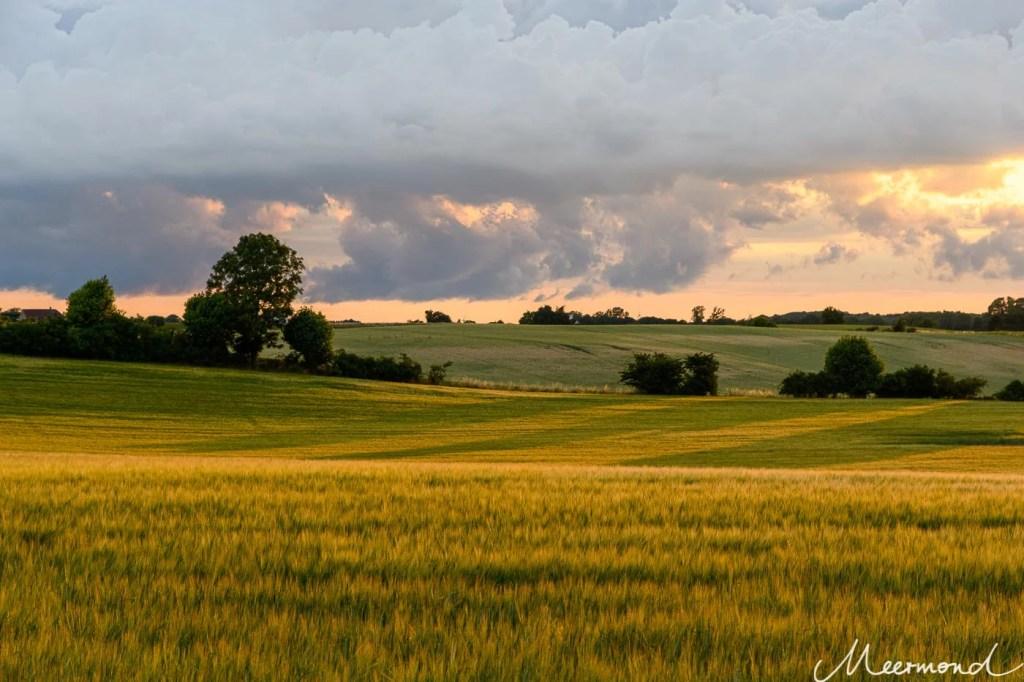 Die untergehende Sonne wirft Schatten und goldenes Licht über ein grünes Feld mit Gerste
