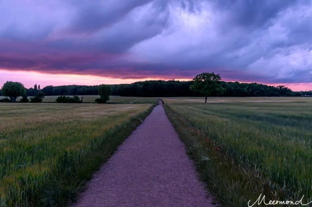 Dunkle Wolken über einem Wäldchen, beschienen vom Sonnenuntergang und davor ein Weg durch ein grünes Weizenfeld