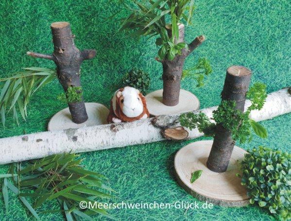 Meerschweinchen Haus Futterbaum