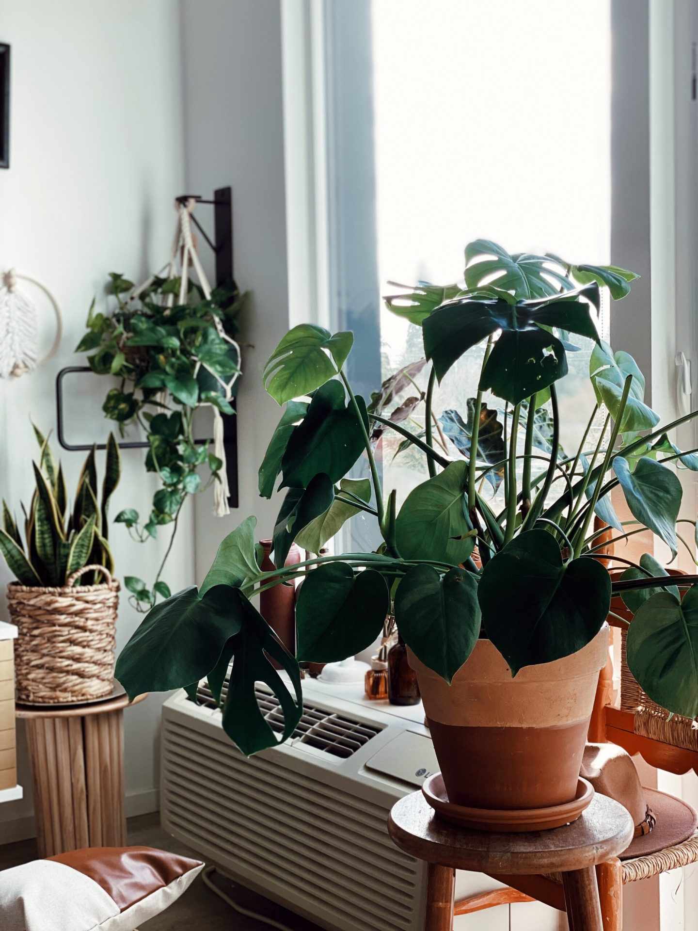 How to care for your pothos plants
