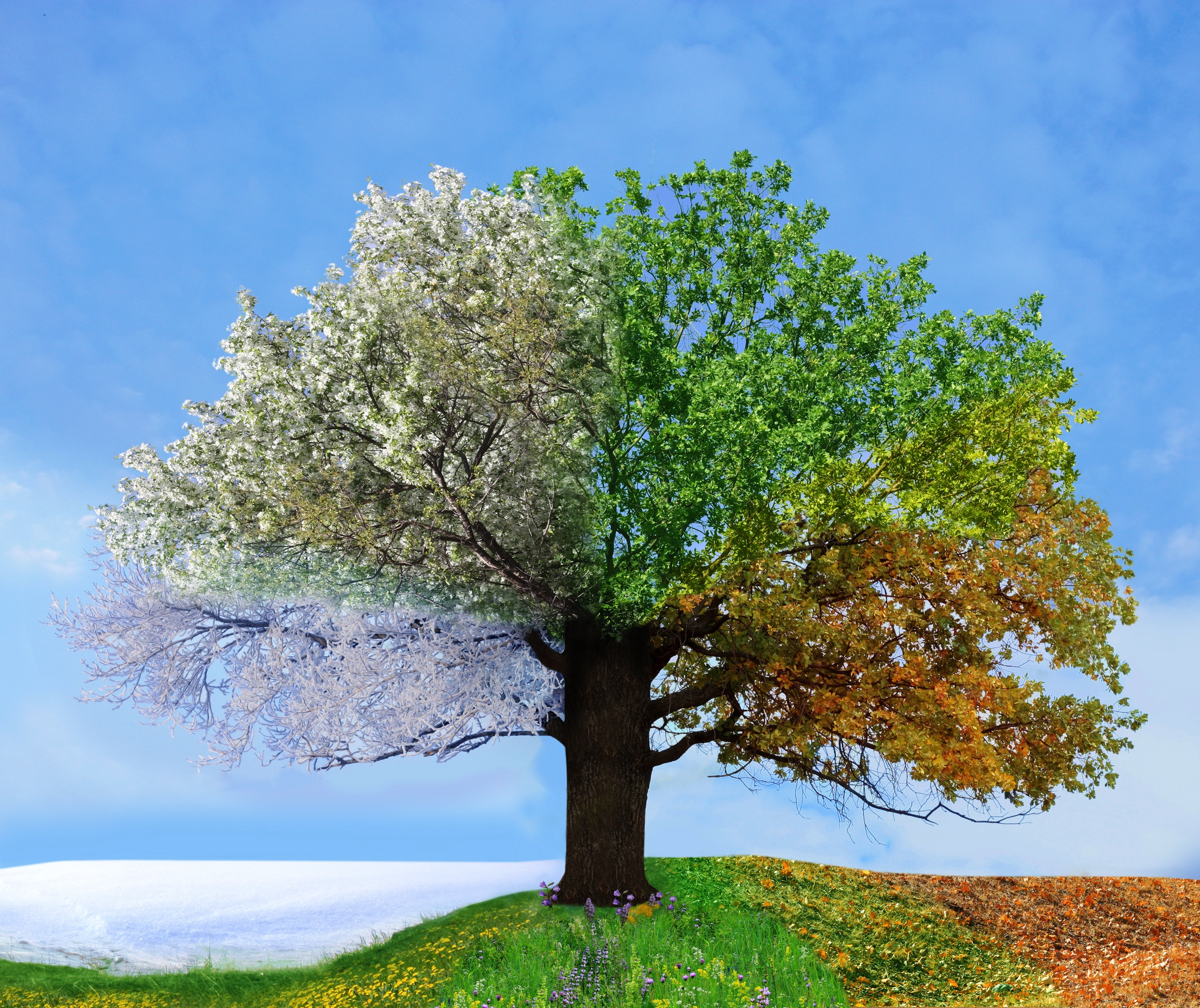Image result for images of changing seasons