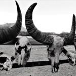 On komodo islands black and white