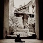 Yogyakarta cat chilling