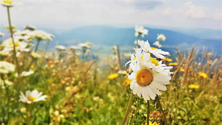 flowers-at-the-top-of-the-Pljesevica-mountain-trail-Optimisedflowers-at-the-top-of-the-Pljesevica-mountain-trail-Optimised