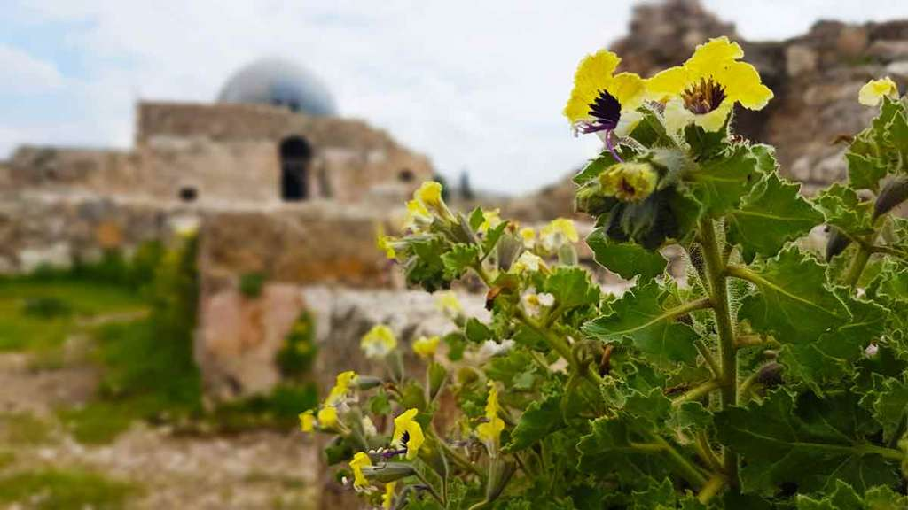 The-Citadel-in-Amman-will-start-off-your-10-days-in-jordan-itinerary-Optimised
