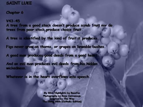 St. Luke chap 6. 5B