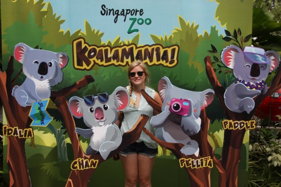 They just got the koala's