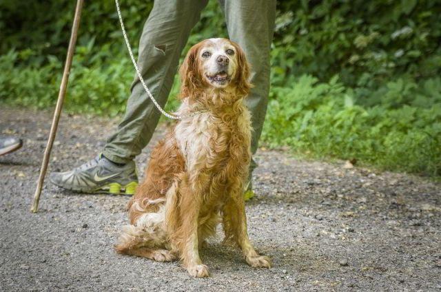Il cane usato nella ricerca del tartufo bianco d'Alba