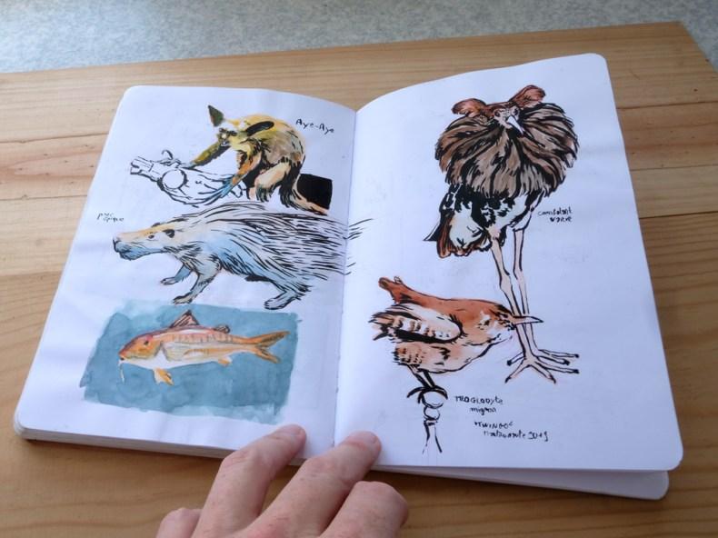 etude animaux dans carnet de dessin. encrage et couleur à l'aquarelle