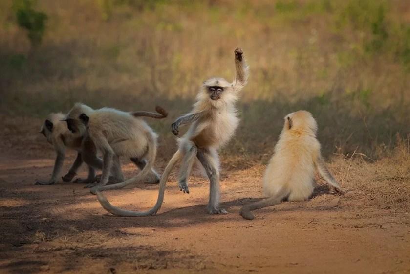 (Source: Sarosh Lodhi - Comedy Wildlife Photography Awards 2021 / Reproduction)