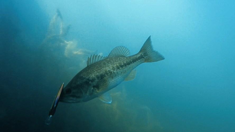 Megabass X-80 Trick Darter Jerkbait Underwater