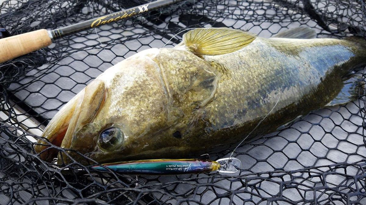 Wintertime-Jerkbait-Fishing---Largemouth