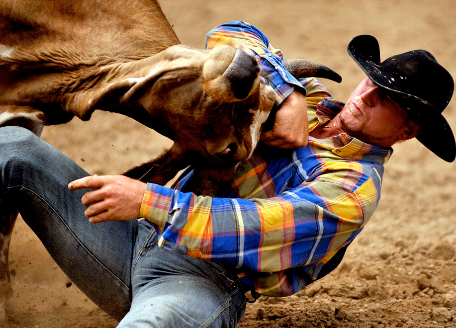 Danian Ross Nutt of Parkhill, California tries to win control of a steer during the steer wrestling contest at the Elkhart County Fair Friday, July 30, 2010.