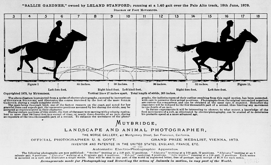 Eadweard Muybridge :: Horse In Motion :: Infographic From 1878