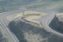 Lone tree on Old Lewiston Hill Highway