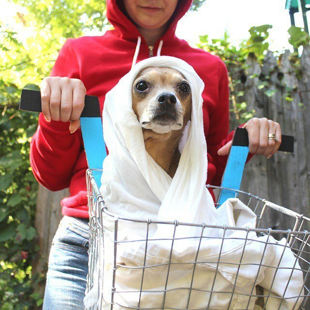 Throwing it back to the cutest alien of all time. Our tiny Gracie rounded out the perfect pair costume as ET & Elliott. Phone home and watch this video on @hgtvhandmade for a great costume for a baby or your small rescue mutt. ☎️🔵🔴⚫️ Those are clearly @reeses