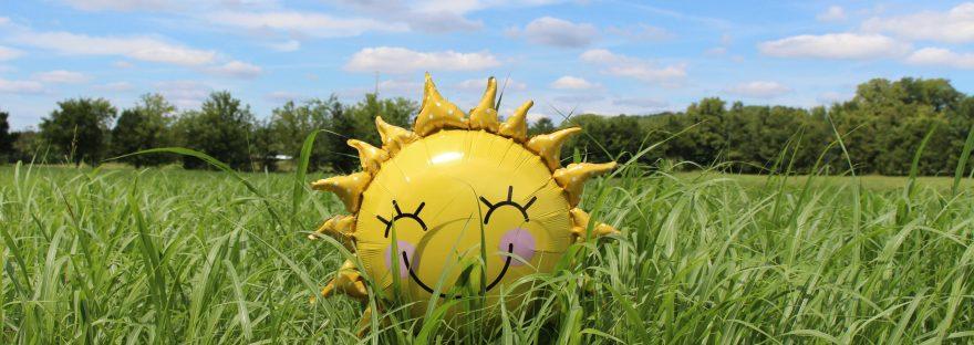 vitamin D immune system