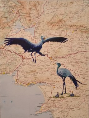 Blue Cranes of the Overberg (2016)