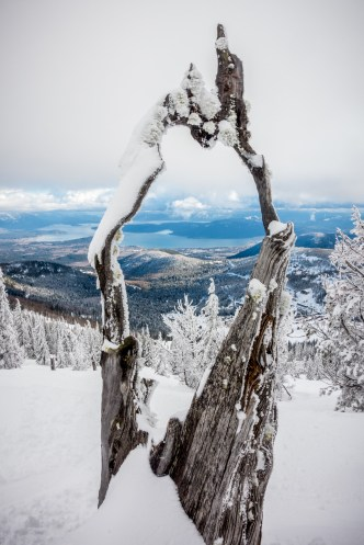 Hollow Tree overlooking Lake Pend Oreille