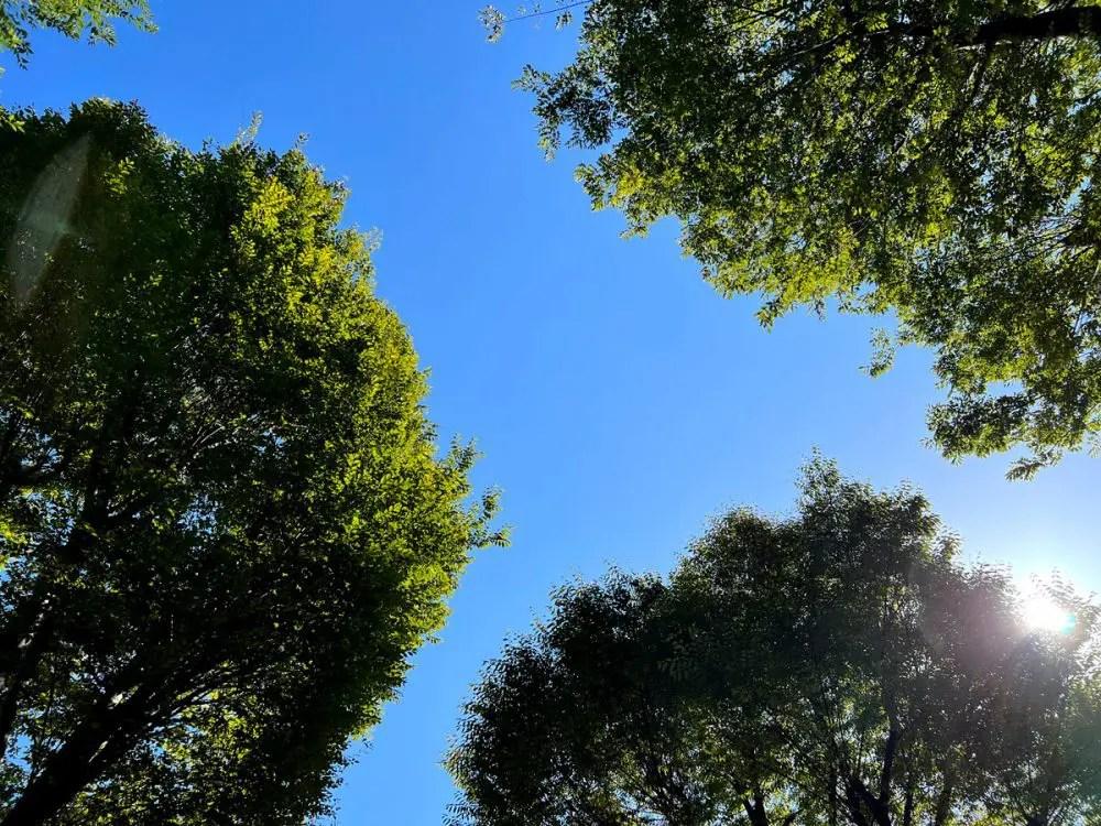 公園での空