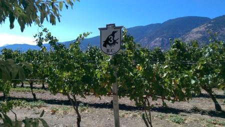 Beautiful views at the winery.