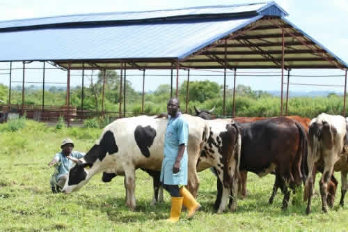 FrieslandCampina WAMCO to launch Nigeria's First Expertise Center for Dairy Development