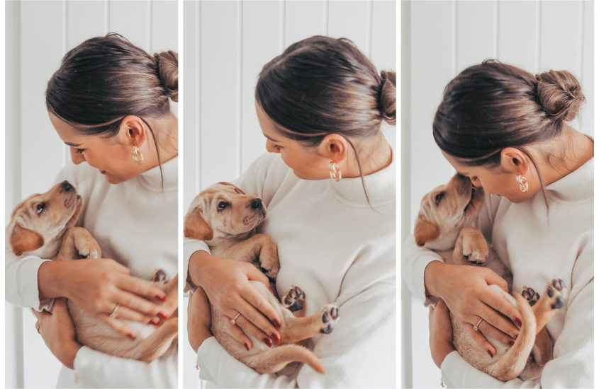 The Six Best Tips When Buying A Puppy