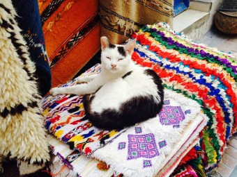 Essaouira cats are totally worth it.