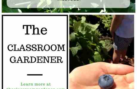The Classroom Gardener, Children's Garden