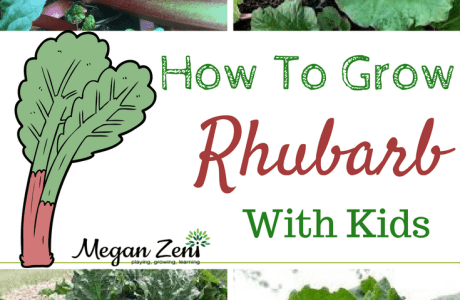 How To Grow Rhubarb With Kids