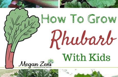 How To Grow Rhubarb With Kids