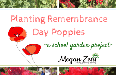 Flander's Field Poppies: A Meaningful Way to Remember
