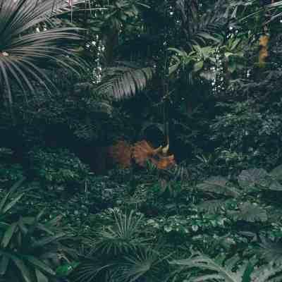 How To Build A Dinosaur Garden