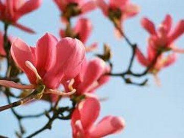 Магнолия цветок на фото и виды растения