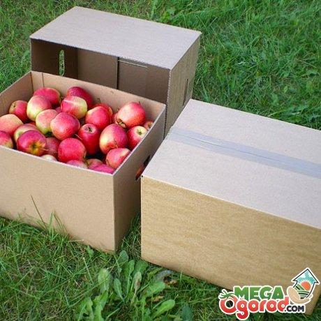 Как хранить яблоки на балконе зимой. Где лучше хранить в квартире