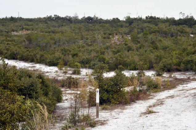 Trail in Lyonia Preserve, Deltona, Florida