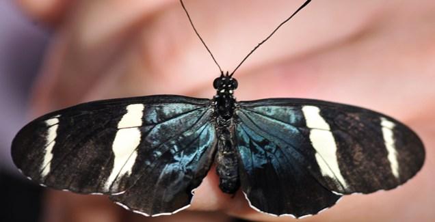 DSC_8938-Butterfly