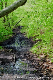 RON_3242-Marcy-Dam-Trail