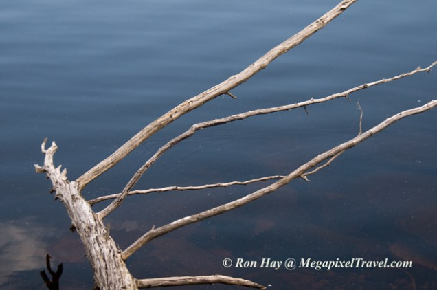 RON_3499-tree-branch