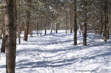 014_9208-trail