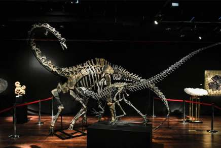 Estos dos esqueletos de dinosaurios en perfectas condiciones tienen 145 millones de años y fueron subastados por €2,85 millones