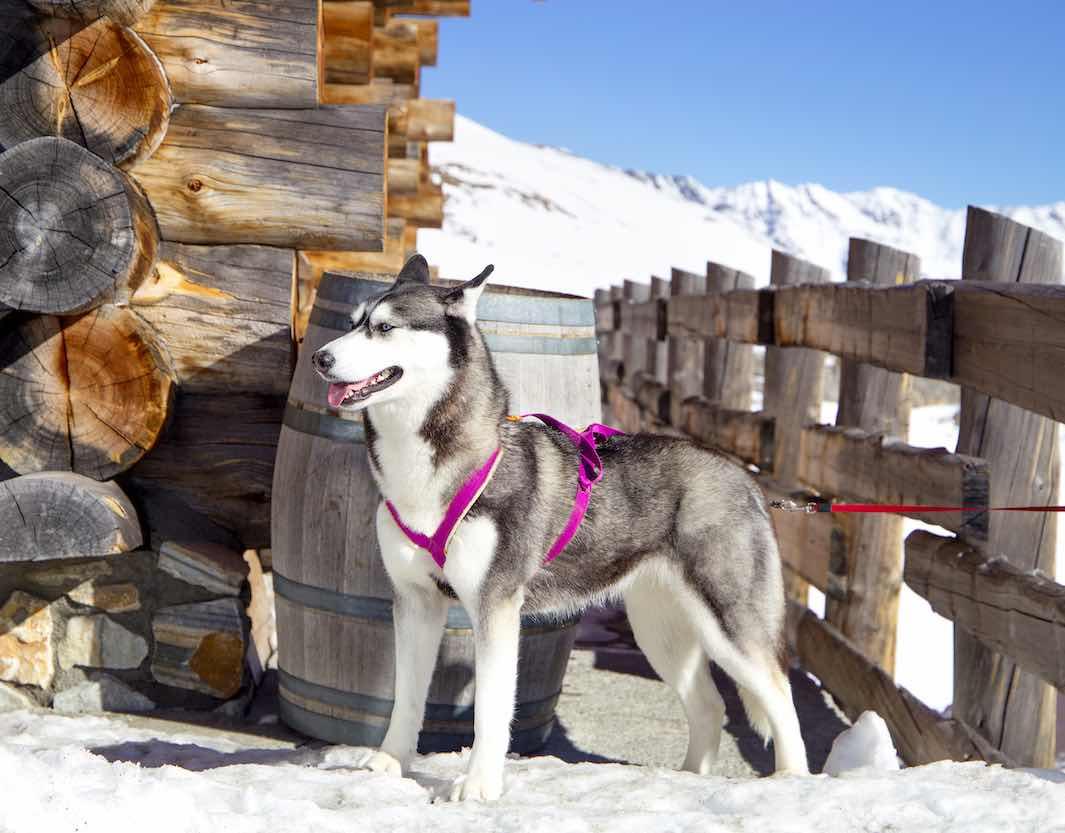 Mandarin Oriental Ginebra te invita a disfrutar de los planes Alpinos más exclusivos este invierno