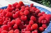 Wild raspberry_redigerad-1