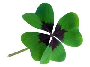 lucky-clover-437259_1280