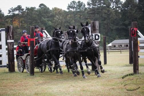 Paul Maye driving Harmony Sporthorses' team of horses