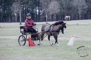 IMG_4423_katydid_derby