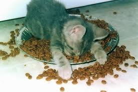 kitten asleep in food