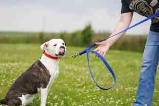 double length dog lead