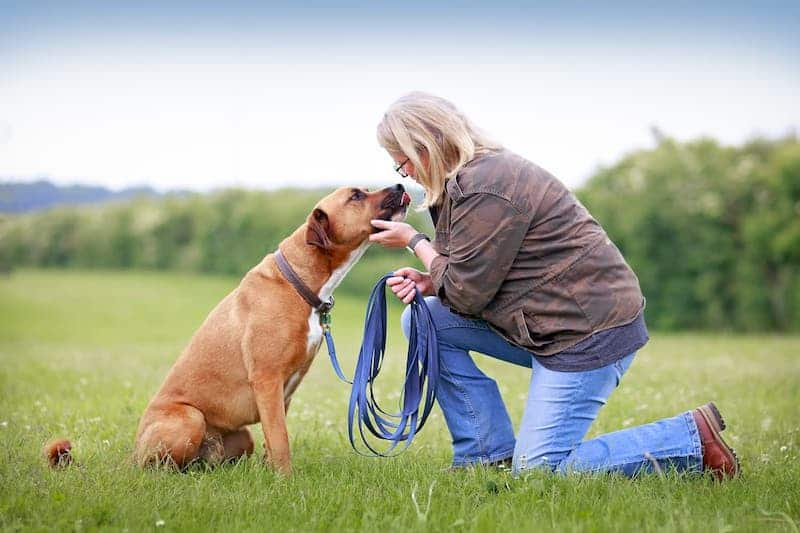 dog training lead